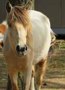 horse edit